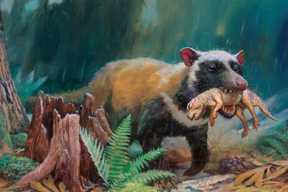 Rise of Mammals