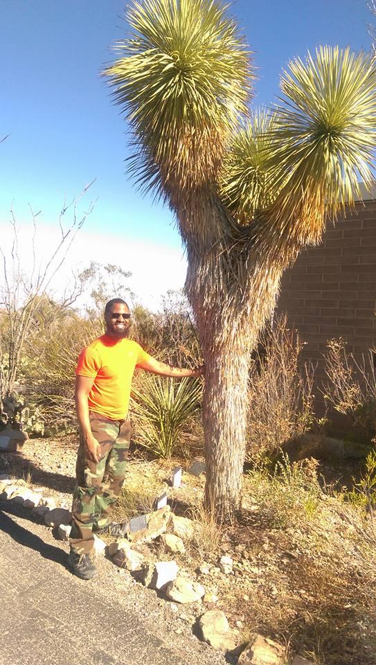 Furry Palm Trees.jpg