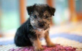 Puppies .jpg