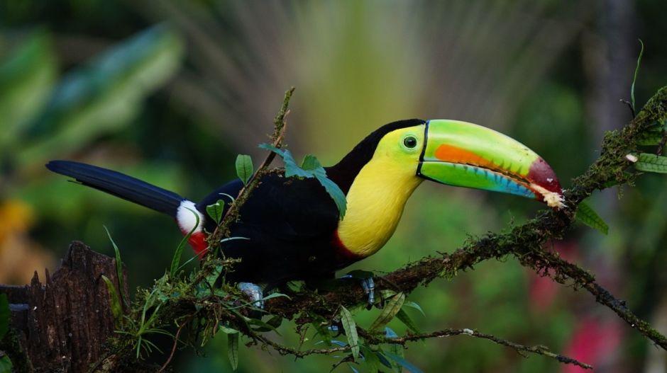 CostaRicanBird.jpg