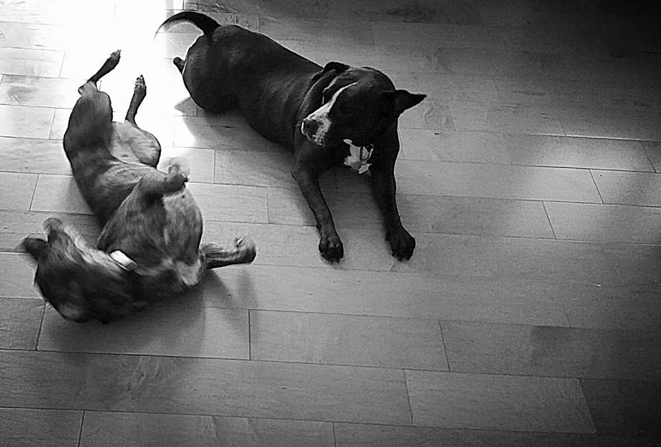 Effie and Stella2