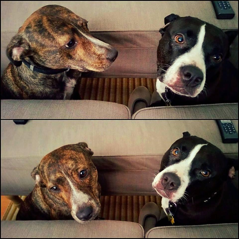 Effie and Stella