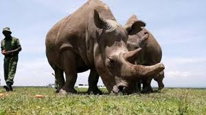 Rhino .jpeg