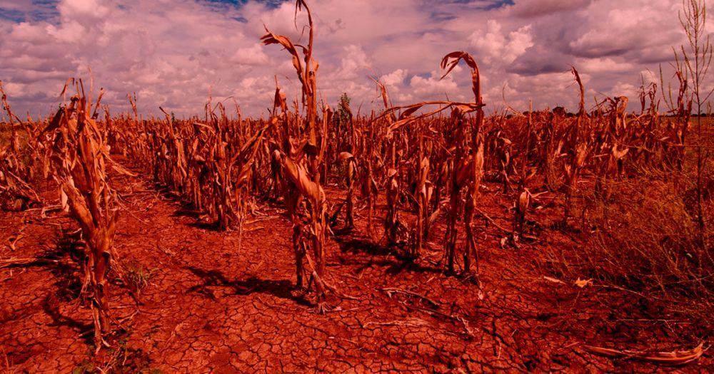 ClimateChangeFoodSupply